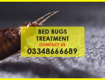 BED BUG TREATMENT IN KARACHI